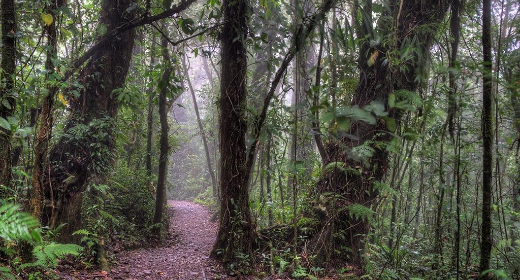 Monteverde, Costa Rica, Supplier