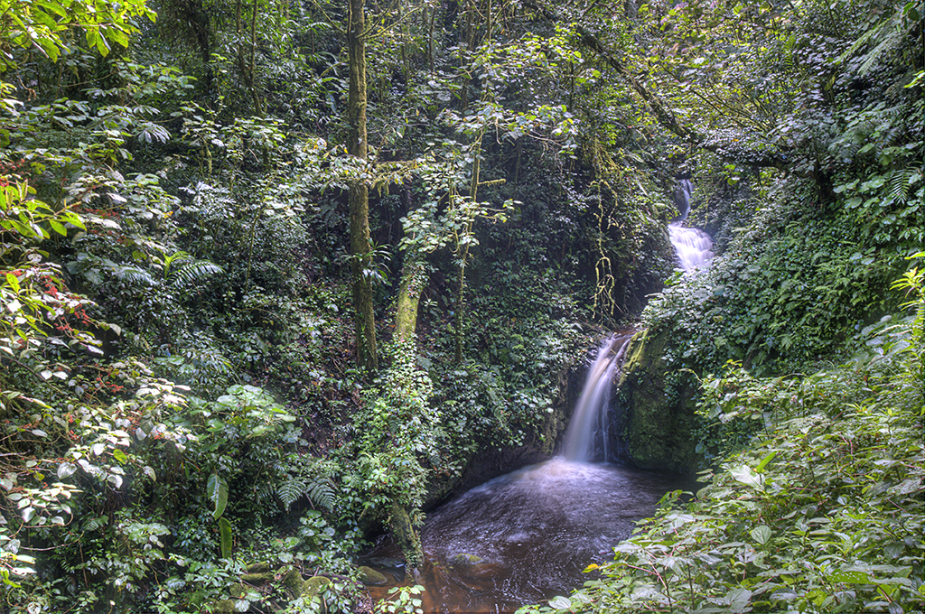 Cloud forest reserve, Monteverde, Costa Rica, Supplier
