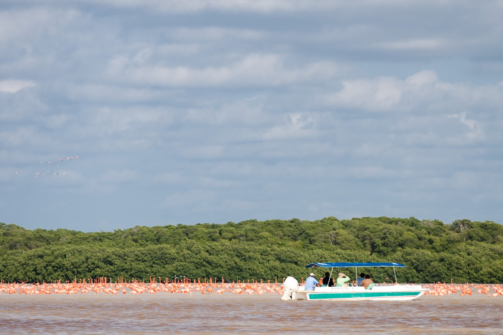 Celestun Ecological Reserve, Yucatan, Mexico, Supplier Photo (Catherwood Travels)