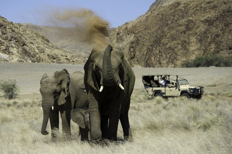 Elephants, Demaraland, Namibia, Africa, Supplier Photo (Ultimate Safaris)