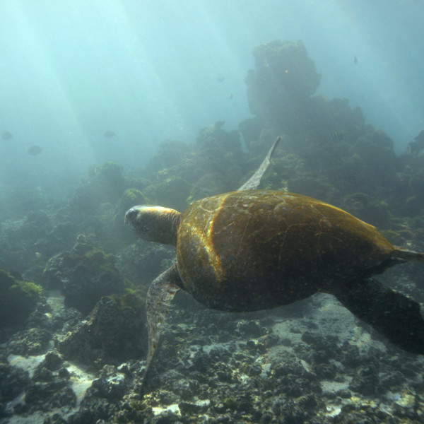 Galapagos Islands Adventure and Wildlife (8 days)