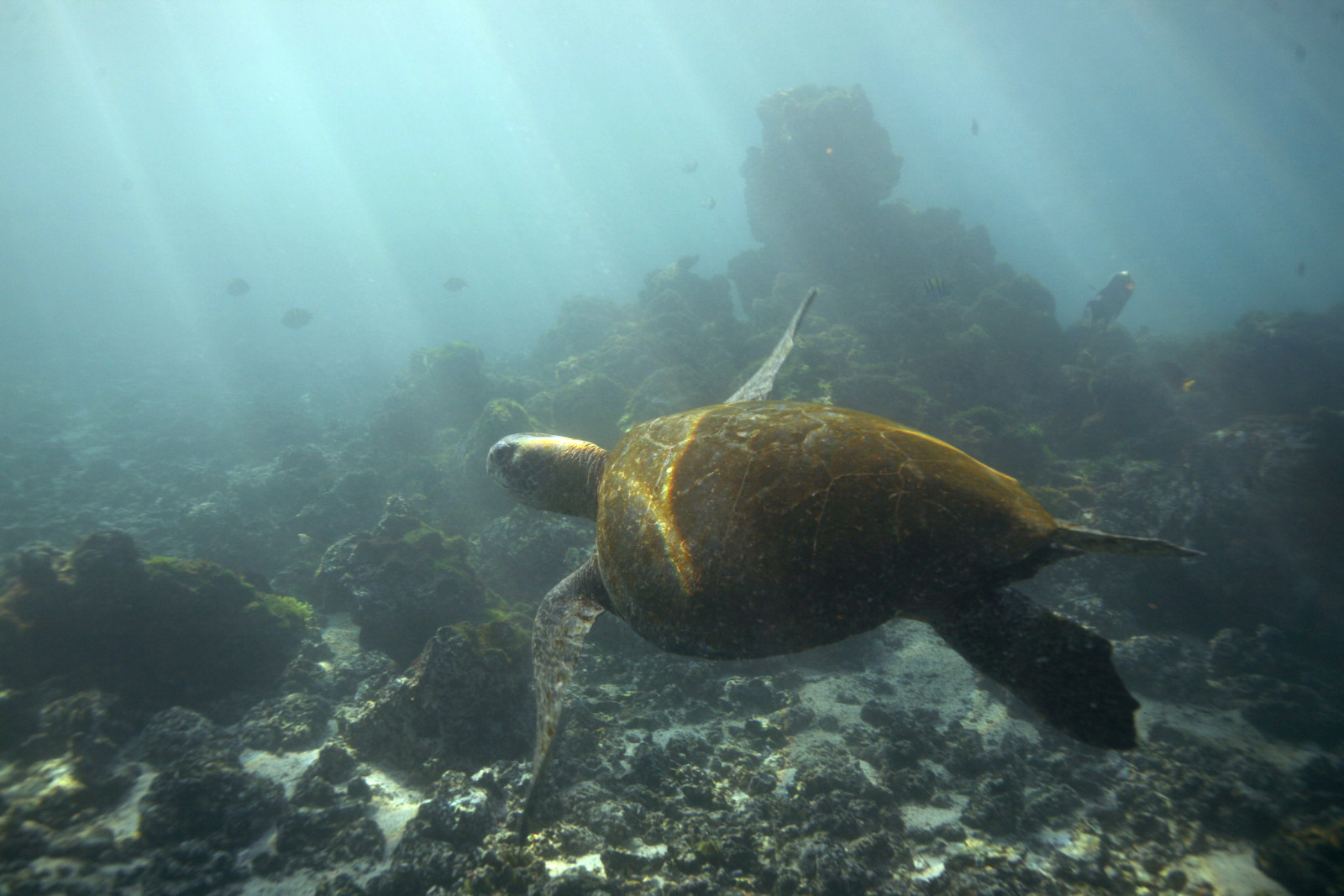 Galapagos islands turtle