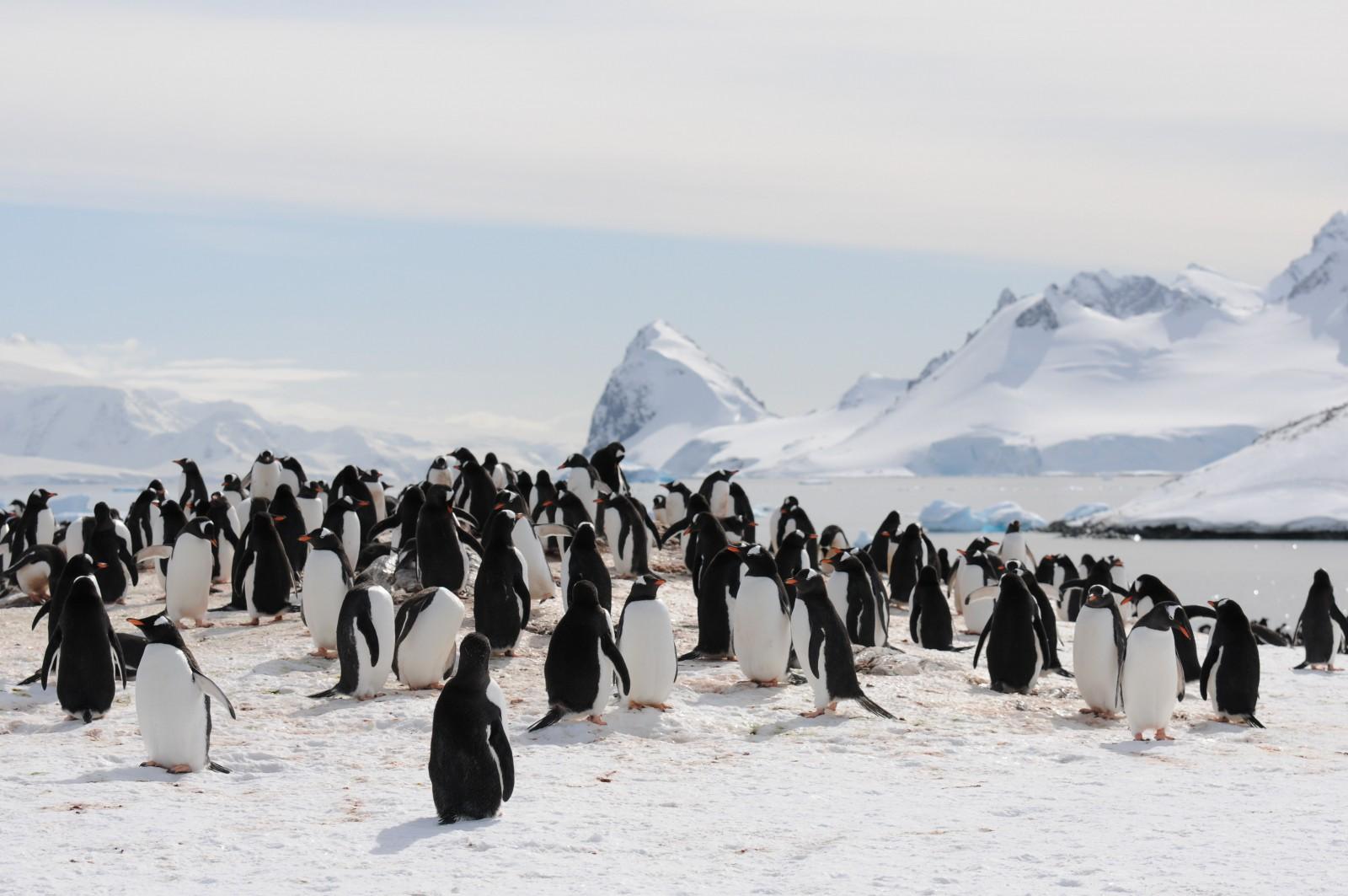 Joost Kersten, Antarctica, Supplier Photo (Unscape)