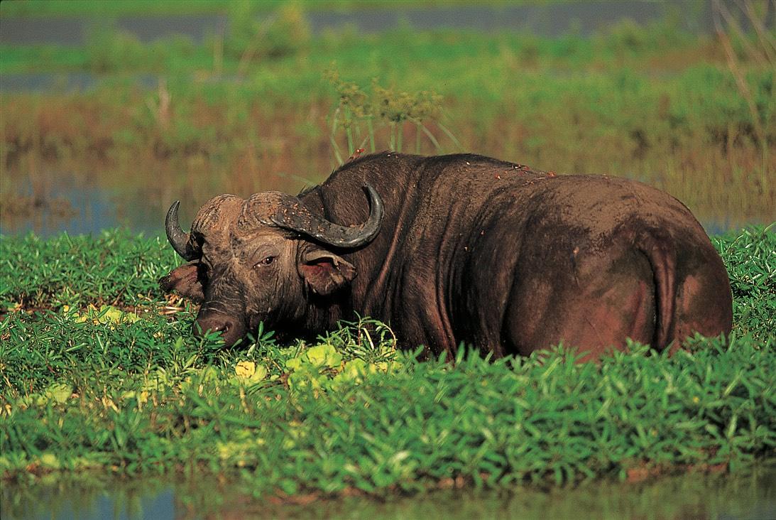 Laikipia, Kenya, Africa, Pixabay.com