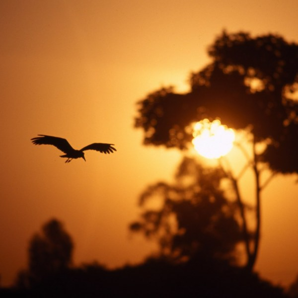 Kenya Safari in Style (10 days)