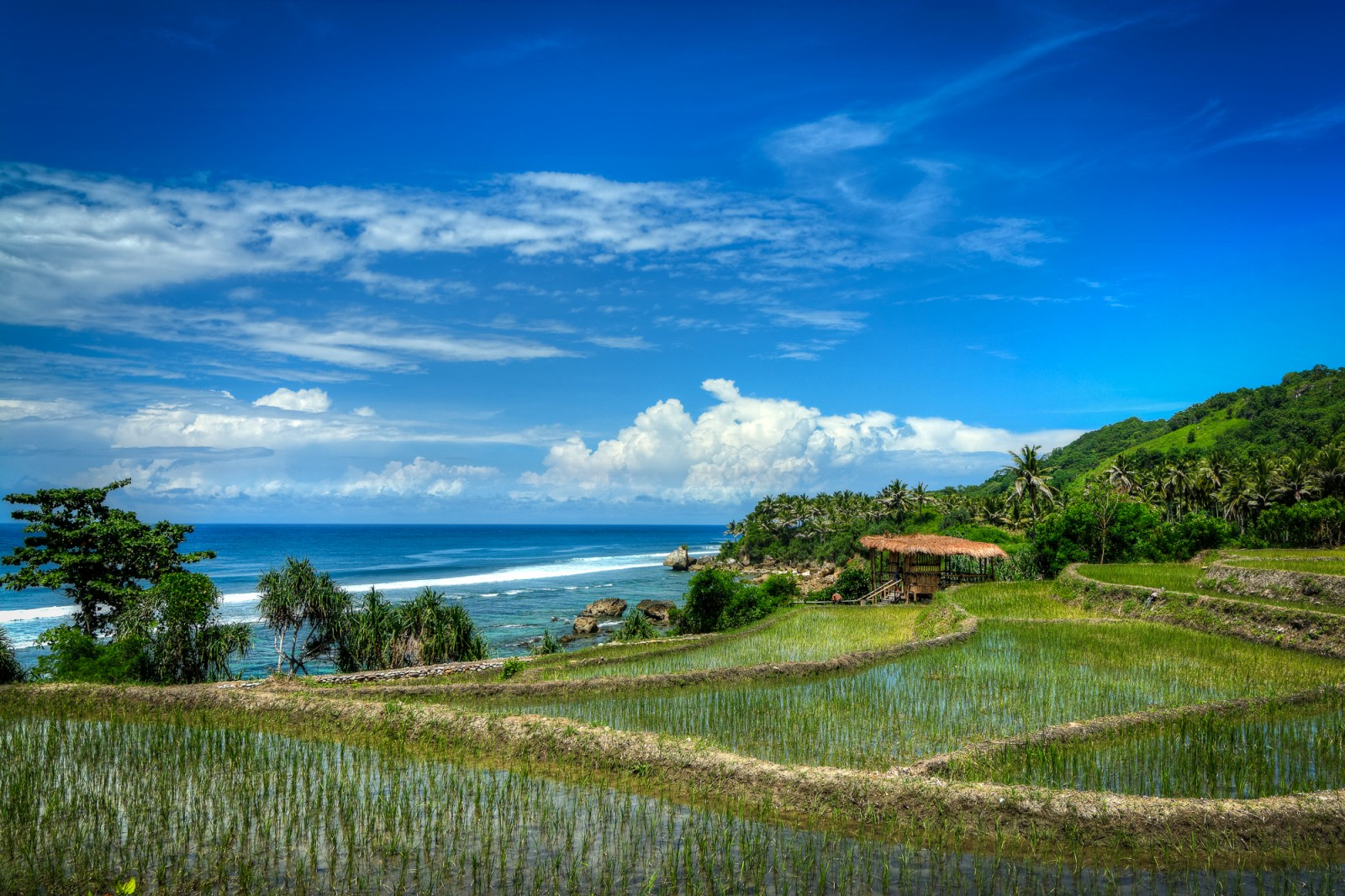 Indonesia rice field and ocean