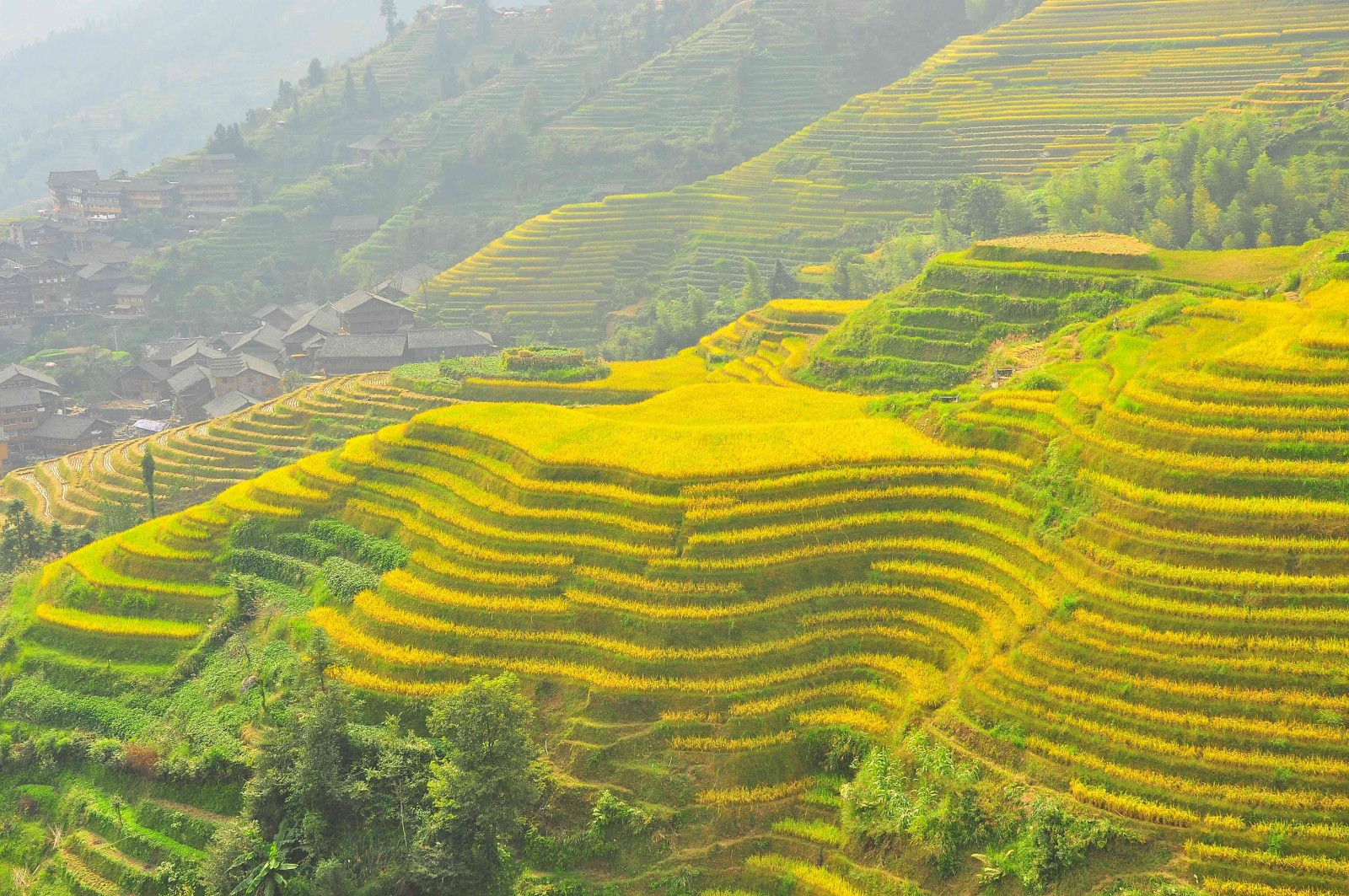 Rice terraces Longsheng, China, Supplier Photo (PureQuest)