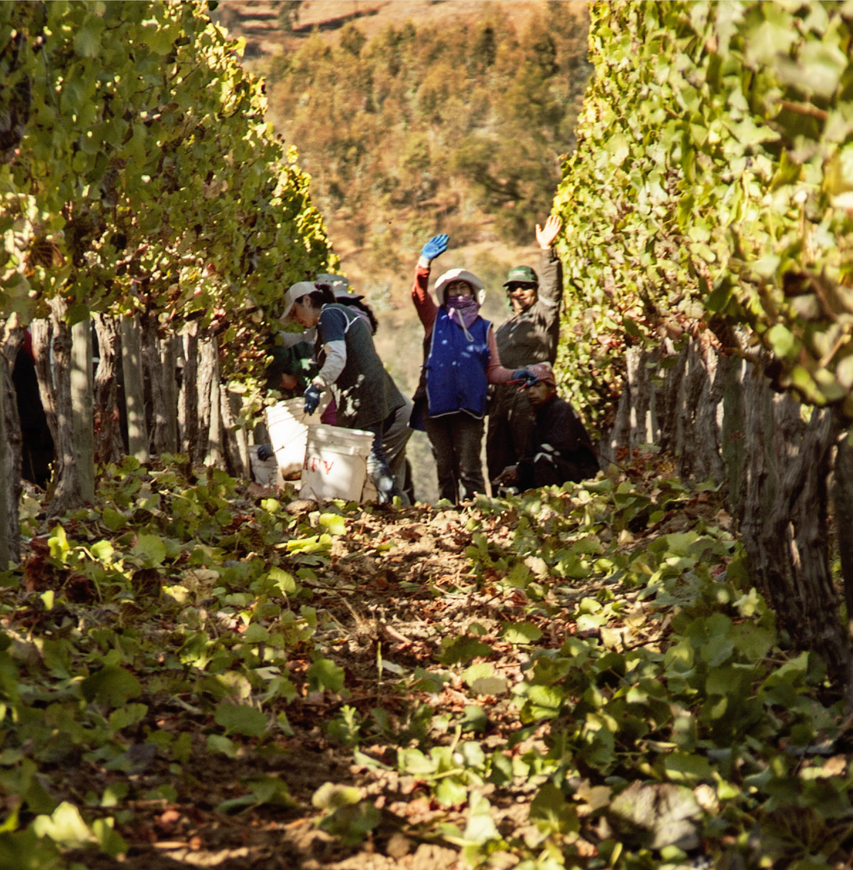 Winemaking Chile
