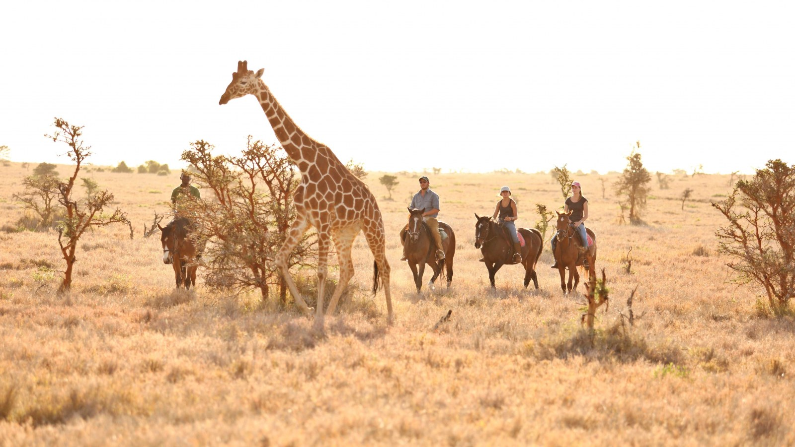 Lewa Wilderness, Kenya, Supplier
