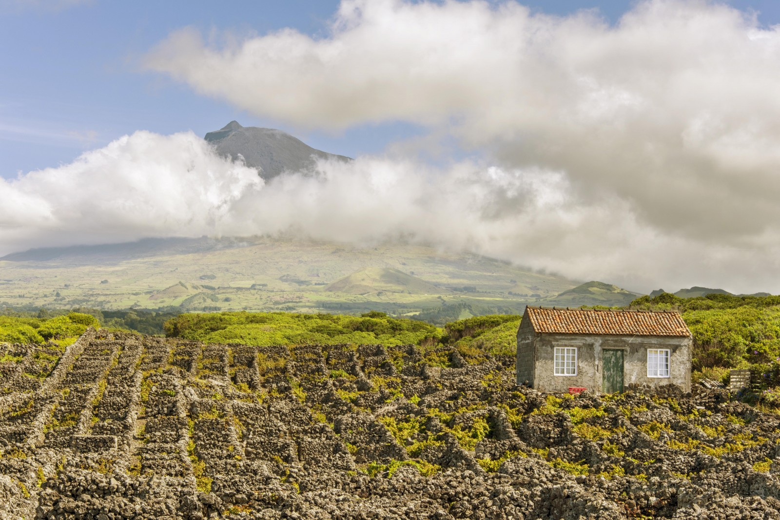 Mount Pico Vineyards -the Azores
