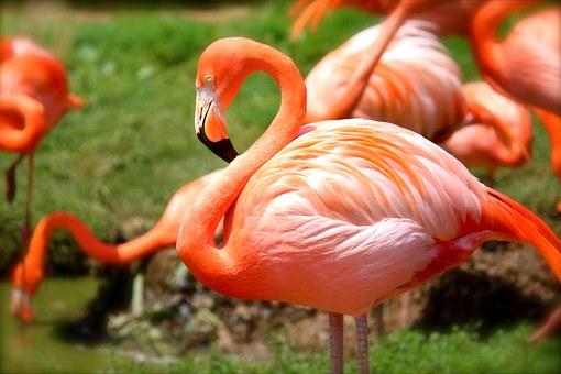 Brackish water-lagoon, Flamingo, Galapagos, Ecuador, Pixabay.com
