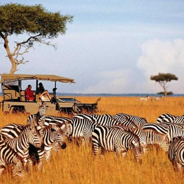 Kenya's Exclusive Safari (10 days)