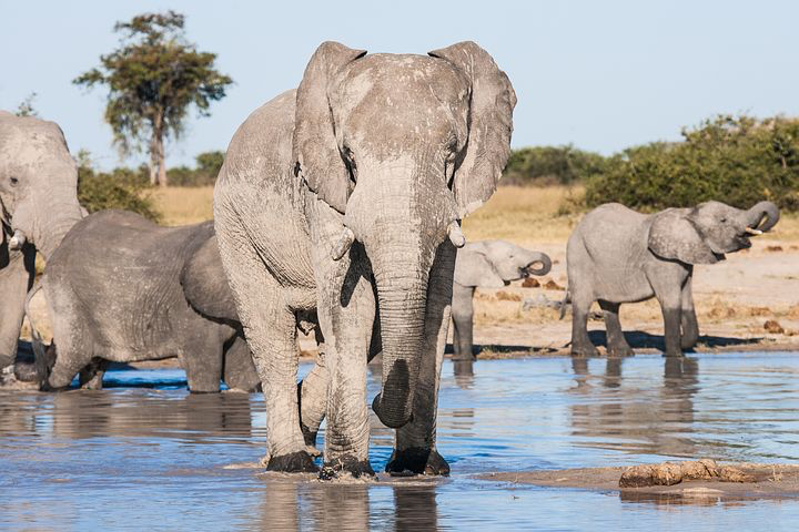 the chobe national park, Africa, Pixabay.com