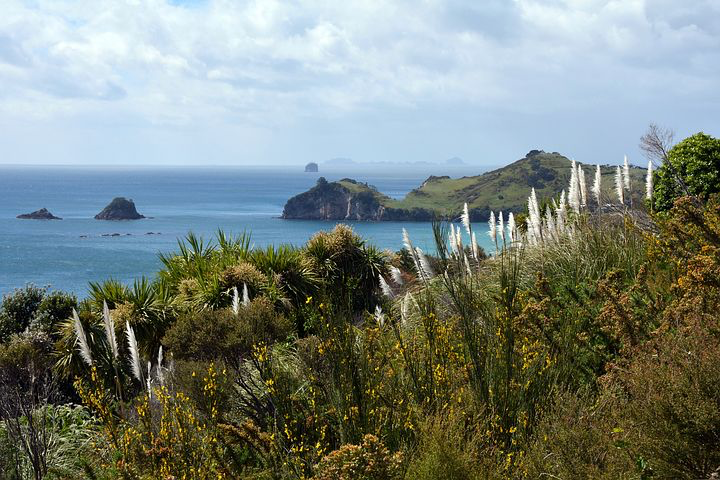 coromandel peninsula, New Zealand, Pixabay.com