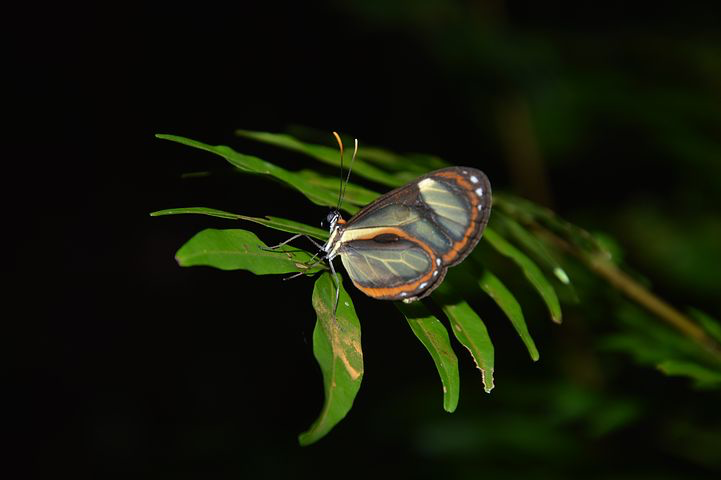 Butterfly, Amazon, Peru, Pixabay.com