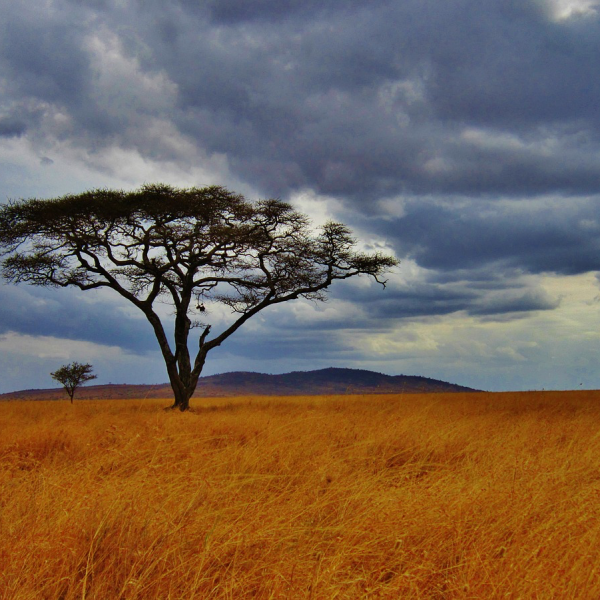 Tanzania Culture & Wildlife Safari (9 days)