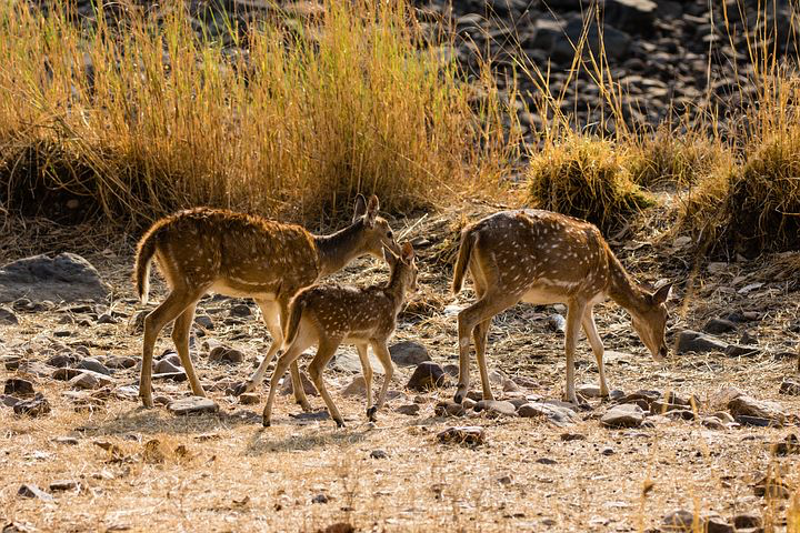 National Park, Ranthambore, India, Pixabay.com