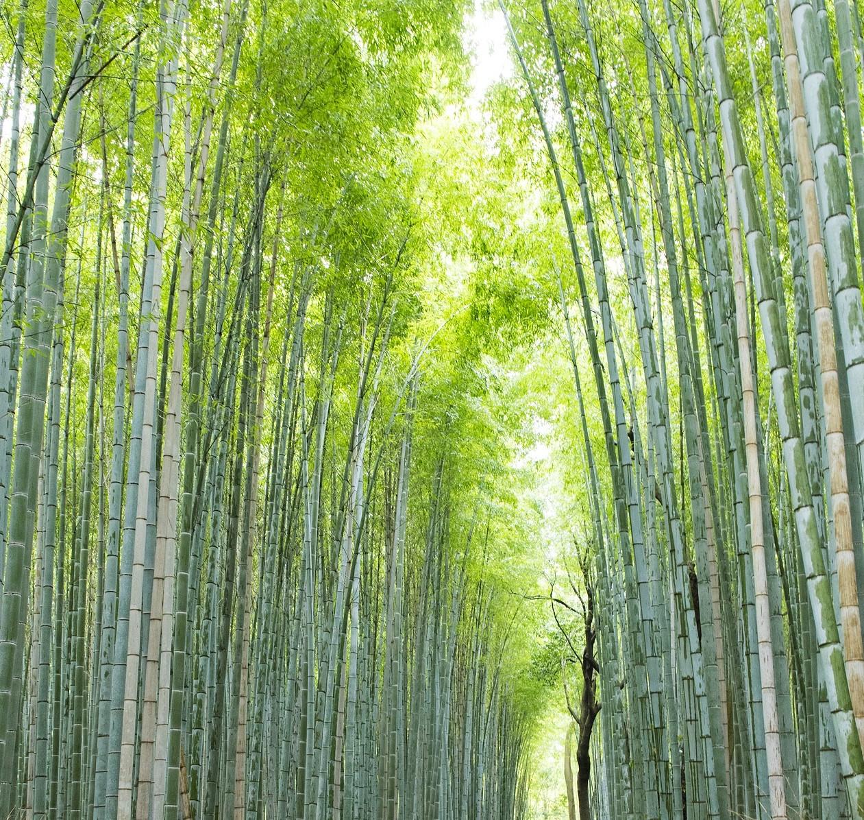 kyoto arashiyama, Japan, Supplier