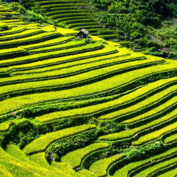 Trek in Sapa, Vietnam (4 days)
