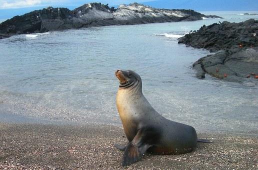 Snorkelling, Isabela Island, Galapagos, Ecuador, Pixabay.com