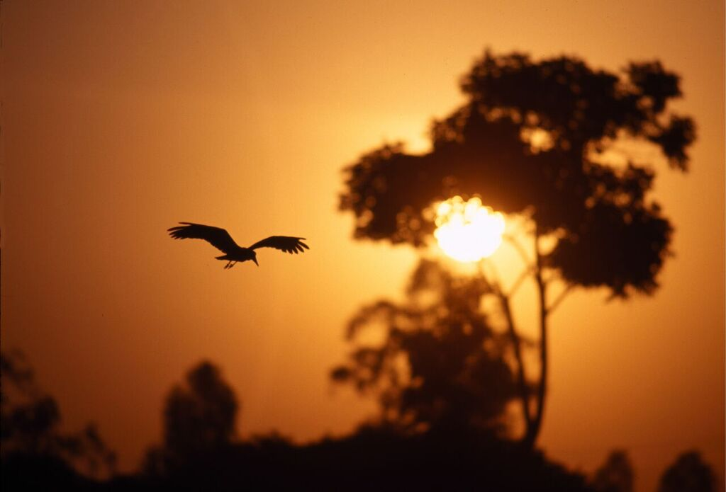 Sunset, Masai Mara, Kenya, Pixabay.com